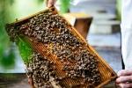 Unsere Bienen_10