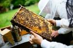 Unsere Bienen_1