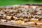 Unsere Bienen_3