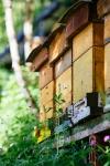 Unsere Bienen_6