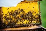 Unsere Bienen_8